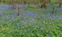 Waterside Natural History Society visit Garston Wood