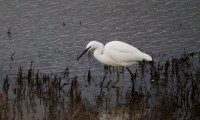 Waterside Natural History Society Visit Keyhaven