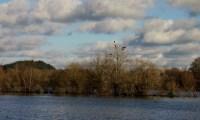 Waterside Natural History Society visit Blashford Lakes