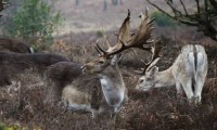 Waterside Natural History Society visit to Bolderwood