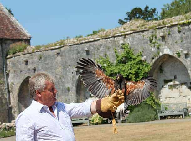 falconry-at-Beaulieu