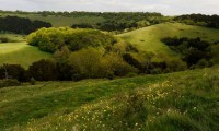 A visit to Chappetts Copse and Old Winchester Hill