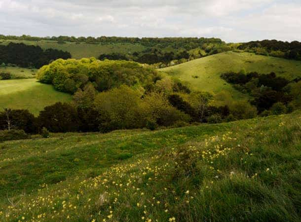 Cowslips on Old Winchester Hill