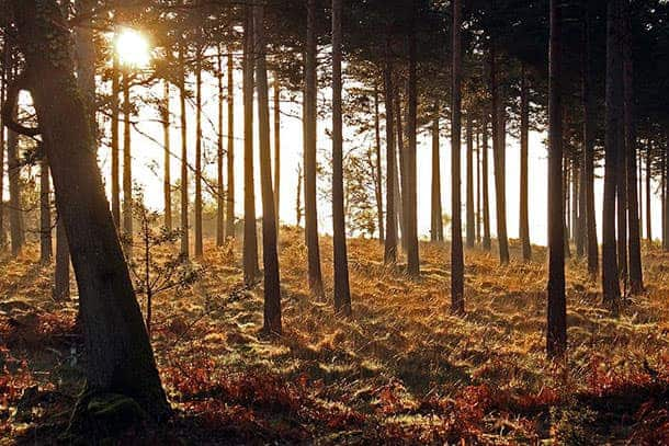 Second place Keith Talbot 'Sunrise in Hawkhill Inclosure'