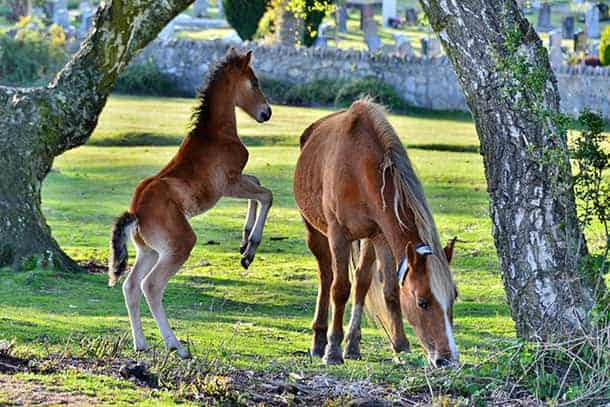 Highly-commended-Sarah-Penfold-'Foal-at-Bolton's-Bench'