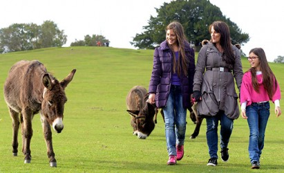 New Forest Walking Festival starts this weekend