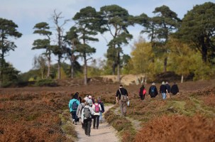 Guided Walks and Cycles in the New Forest