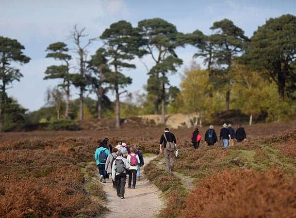Guided Walks
