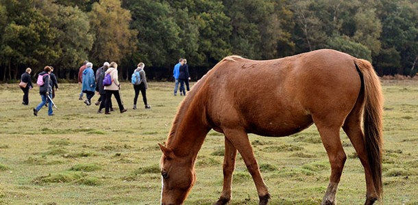 New Forest Walking Festival offers behind the scenes walks for all