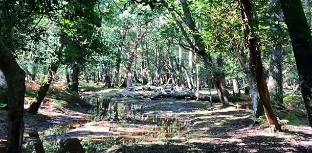 Waterside Natural History Society walk from Blackwater Arboretum