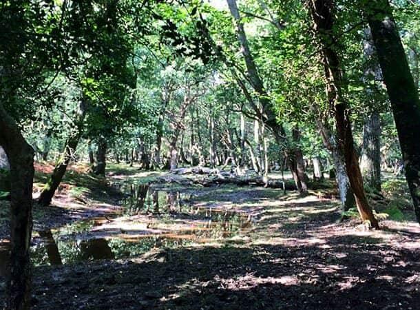 Blackwater Arboretum