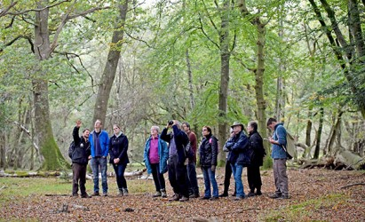 Explore the New Forest's unusual side this autumn