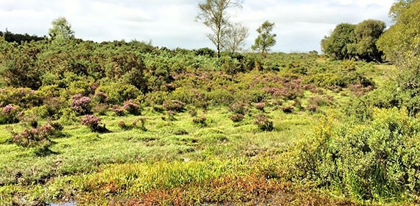 Waterside Natural History Society visit Crockford in the New Forest