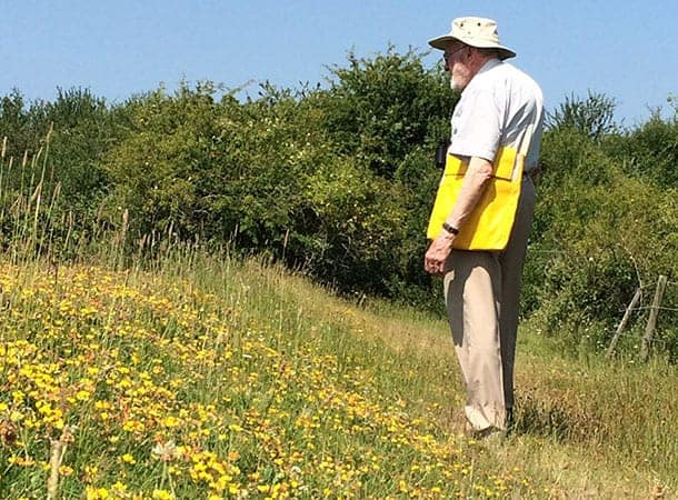 veals lane walk - summer meadow