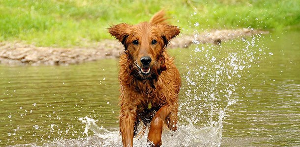 How to keep dogs cool in the summer heat
