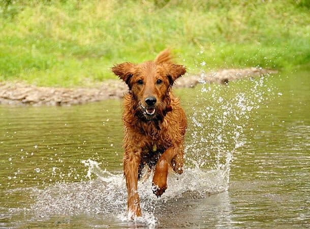 summer - keep dogs cool