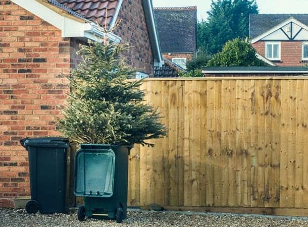Christmas leaves council gardeners feeling chipper